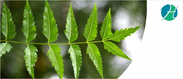What are the benefits of Neem?