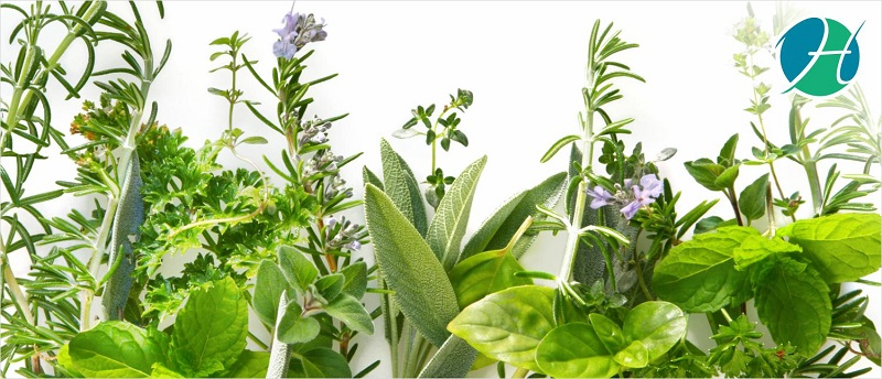The Top Five Adaptogenic Herbs For Stress