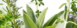 Small thumb the top 5 adaptogenic herbs for stress   banner