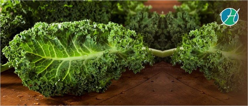 Why Kale Is The Superfood That It's All Cracked Up to Be