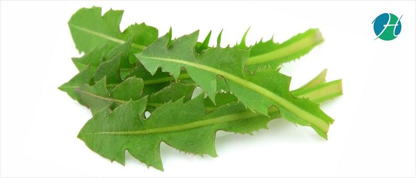 Health Benefits of Dandelion leaf