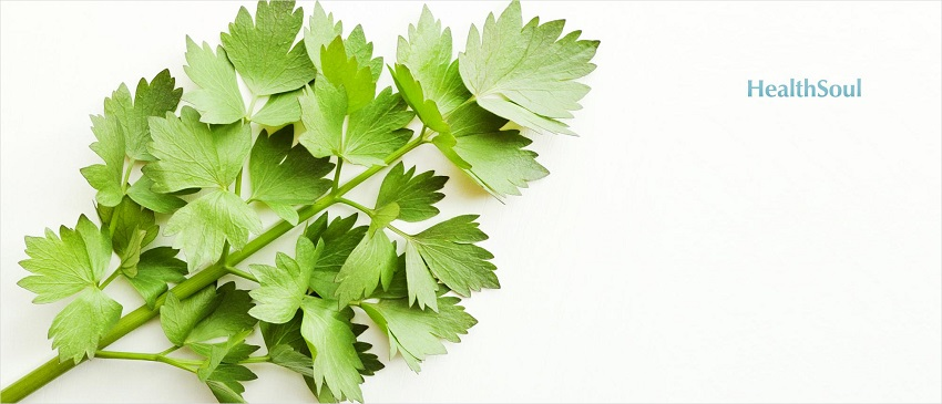 Health Benefits of Lovage