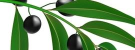 Health Benefits of Simarouba amara
