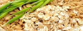 Small thumb avena sativa benefits   banner