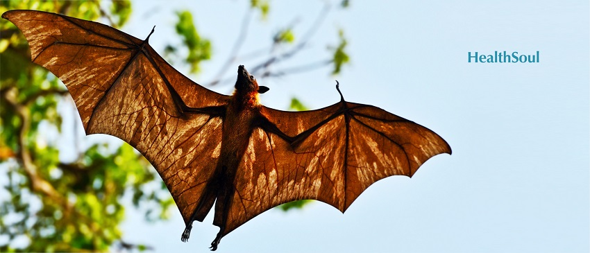 5 Diseases You Can Get from Bats
