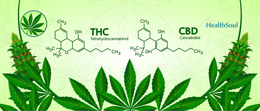 THC and CBD: One Plant, Two Chemicals