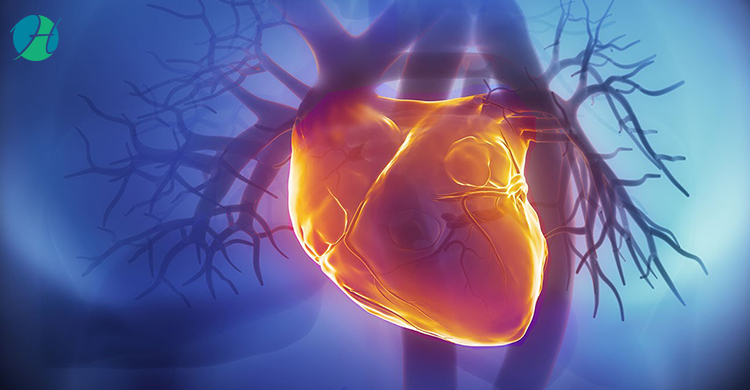 Cardiac risk assessment 2