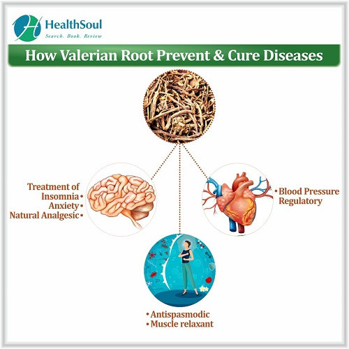 How Valerian Root Prevent & Cure Diseases | HealthSoul