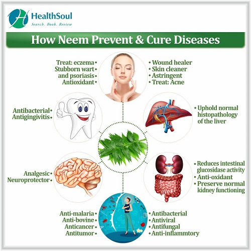 How Neem Prevent & Cure Diseases | HealthSoul