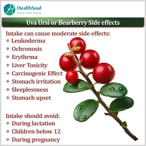 Uva Ursi or Bearberry Side Effects | HealthSoul