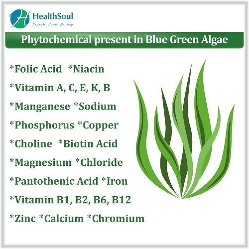 Phytochemical present in Blue Green Algae | HealthSoul