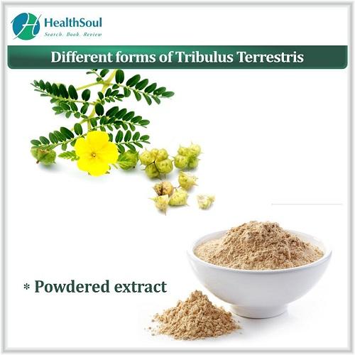Different forms of Tribulus Terrestris | HealthSoul