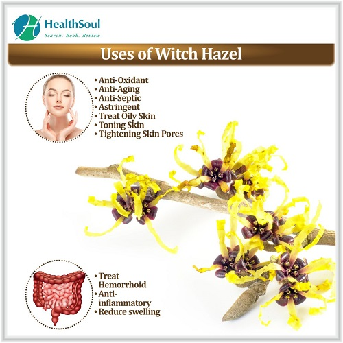 Uses of Witch Hazel | HealthSoul