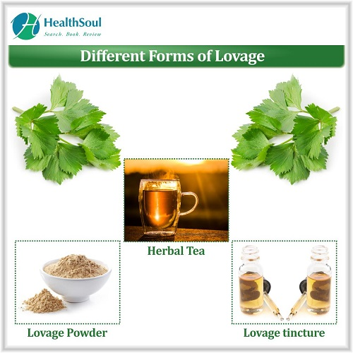 Different Forms of Lovage | HealthSoul