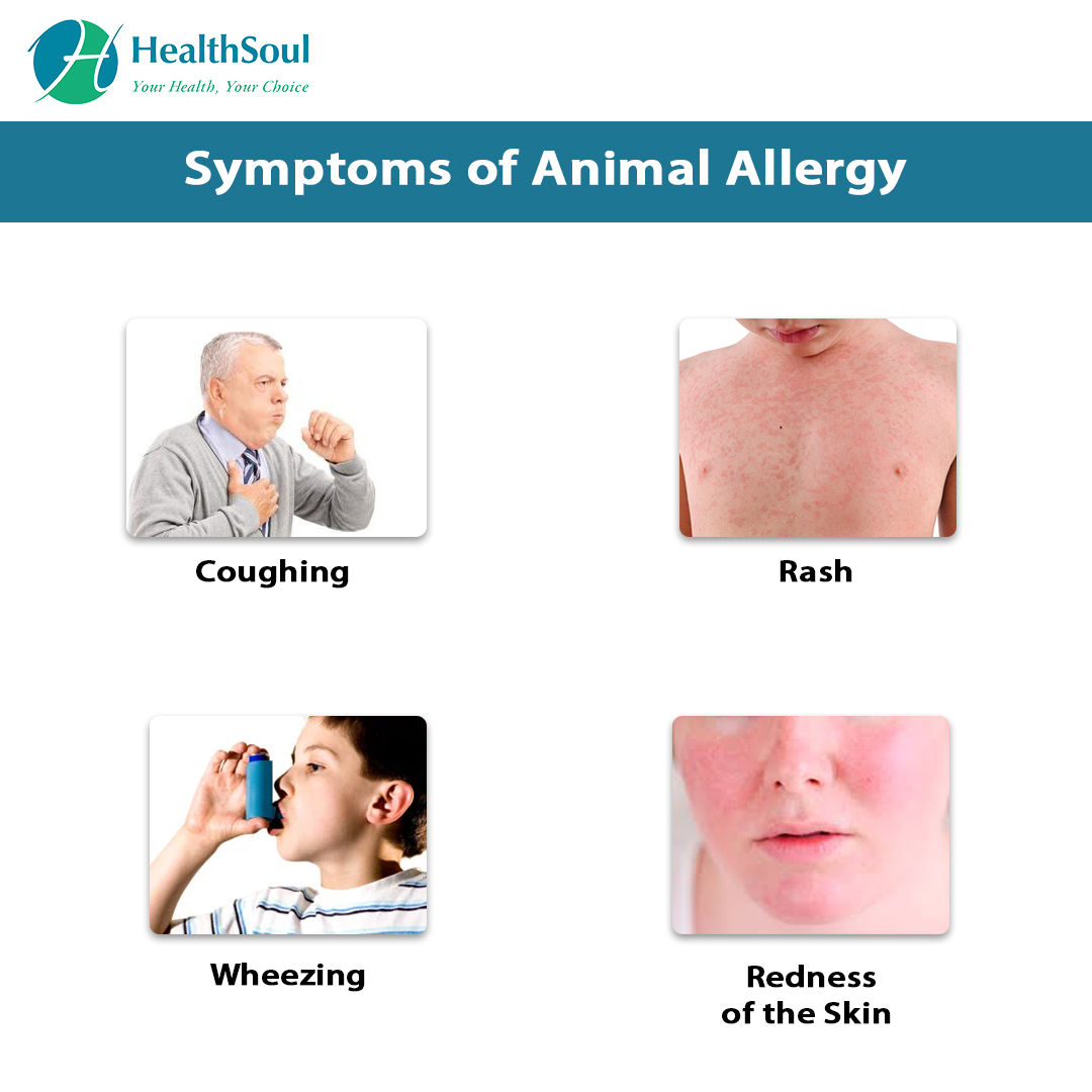 Animal Allergy: Symptoms and Treatment | Allergy/Immunology