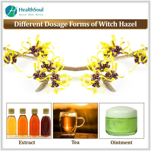 Different Dosage Forms of Witch Hazel | HealthSoul