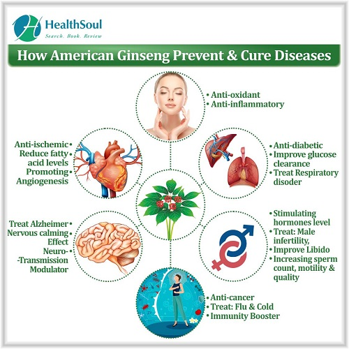 How American Ginseng Prevent & Cure Diseases | HealthSoul