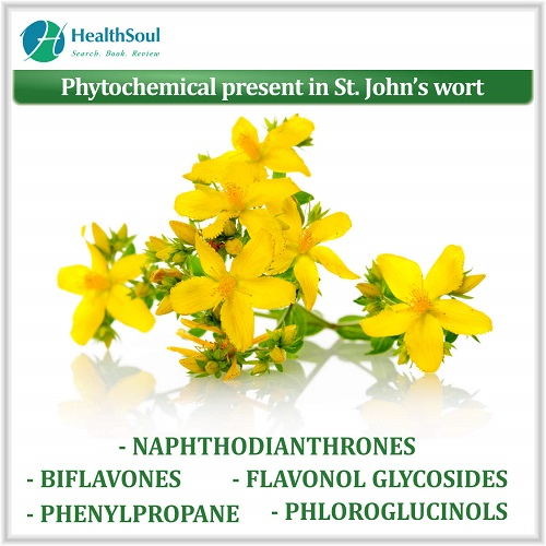 Phytochemical present in St. John's wort | HealthSoul