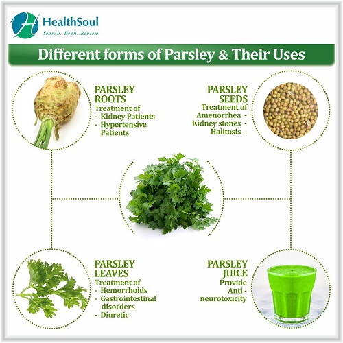 Different Forms of Parsley & Their Uses   HealthSoul