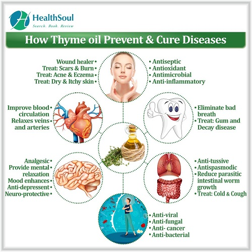 How Thyme Oil Prevent & Cure Diseases | HealthSoul