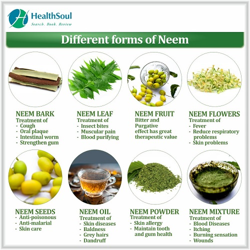 Different Forms of Neem | HealthSoul