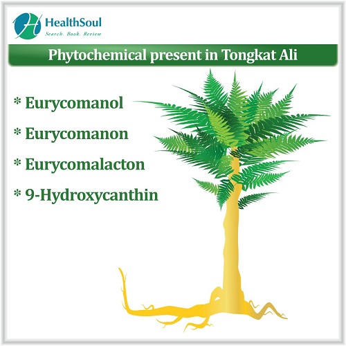 Phytochemical Present in Tongkat Ali   HealthSoul