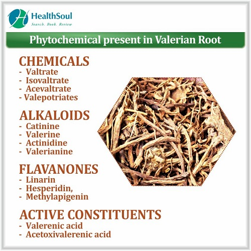 Phytochemical Present in Valerian Root | HealthSoul
