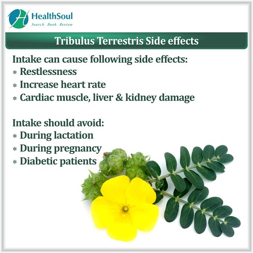 Tribulus Terrestris Side effects | HealthSoul
