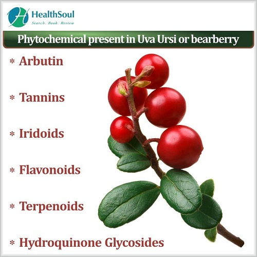 Phytochemical present in Uva Ursi or Bearberry | HealthSoul