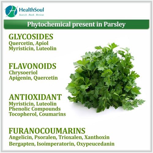 Phytochemical Present in Parsley   HealthSoul