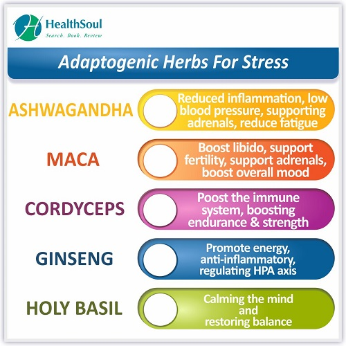 Adaptogenic Herbs for Stress | HealthSoul