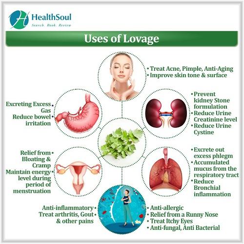 Uses of Lovage | HealthSoul