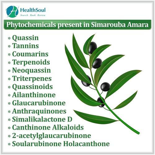 Phytochemicals Present in Simarouba Amara | HealthSoul
