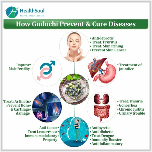 How Guduchi Prevent & Cure Disease | HealthSoul