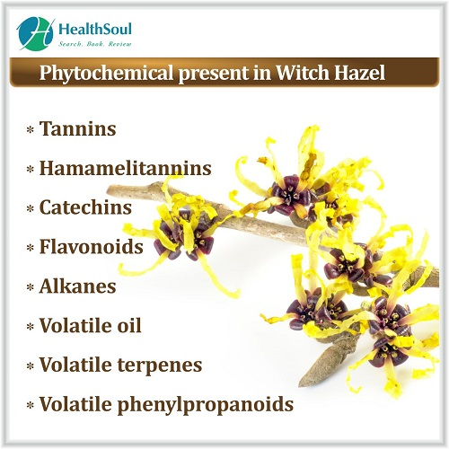 Phytochemical Present in Witch Hazel | HealthSoul