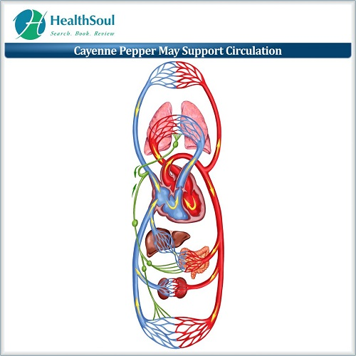 Cayenne Pepper May Support Circulation   HealthSoul