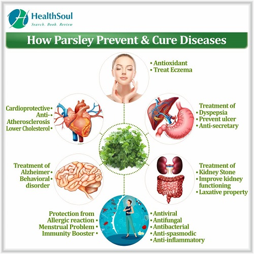 How Parsley Prevent & Cure Diseases   HealthSoul