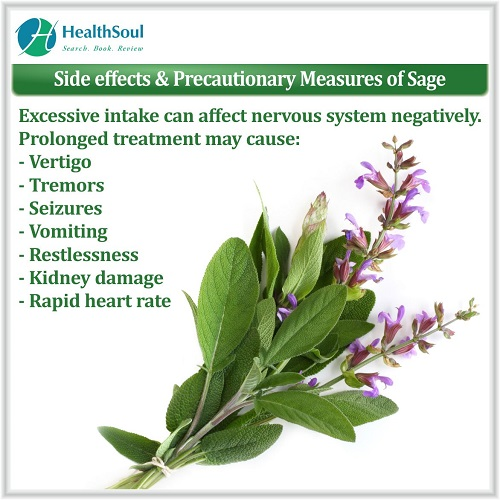 Side Effects & Precautionary Measures of Sage | HealthSoul