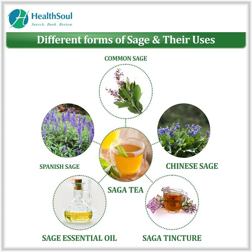 Different forms of Sage & Their Uses | HealthSoul