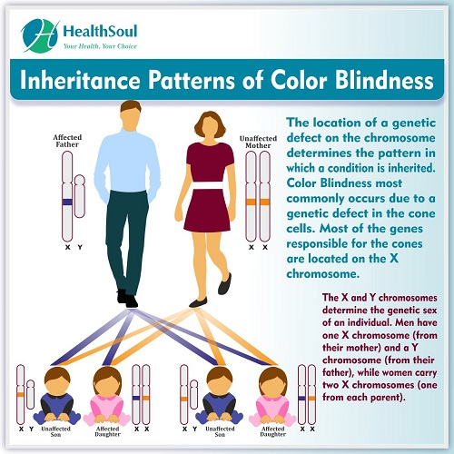 Inheritance Patterns of Color Blindness | HealthSoul