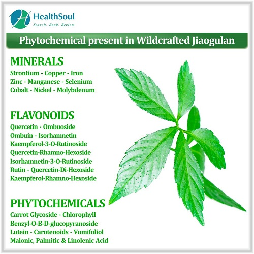 Phytochemical present in Wildcrafted jiaogulan   Healthsoul