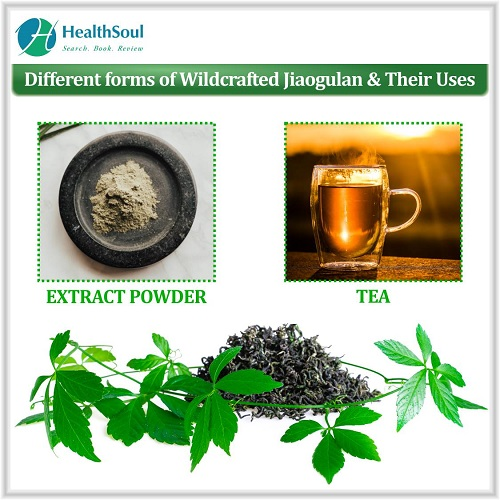 Different forms of Wildcrafted jiaogulan & Their Uses   HealthSoul