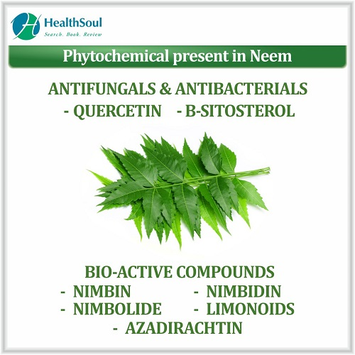 Phytochemical Present in Neem | HealthSoul