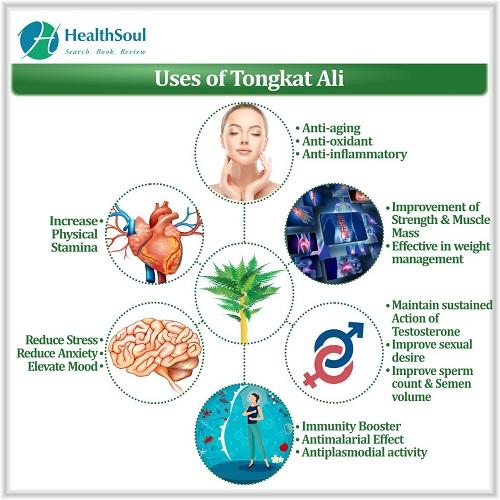 Uses of Tongkat Ali   HealthSoul