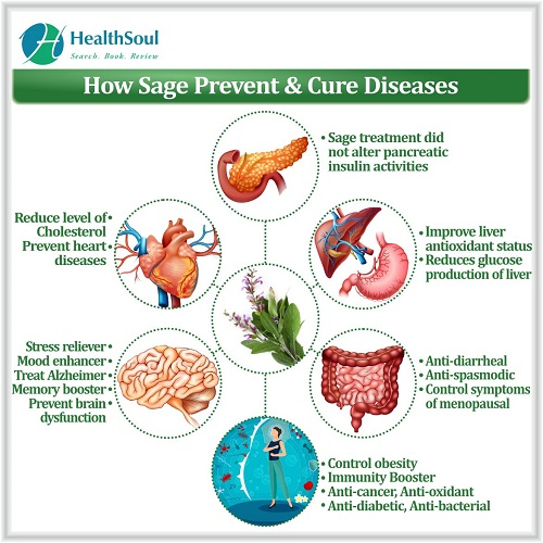 How Sage Prevent & Cure Disease | HealthSoul
