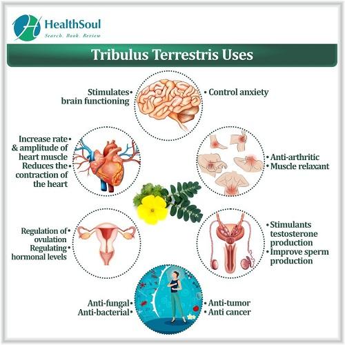 Tribulus Terrestris Uses | HealthSoul
