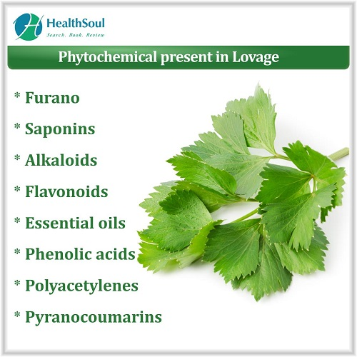 Phytochemical Present in Lovage | HealthSoul
