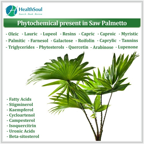 Phytochemical Present in Saw Palmetto | HealthSoul