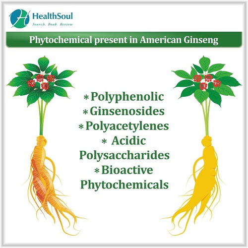 Phytochemical Present in American Ginseng | HealthSoul