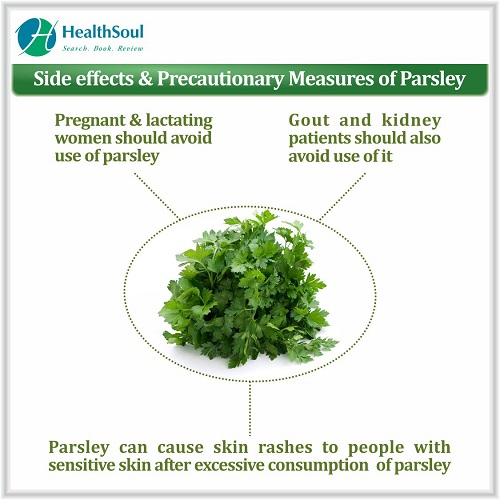 Side Effects & Precautionary Measures of Parsley   HealthSoul